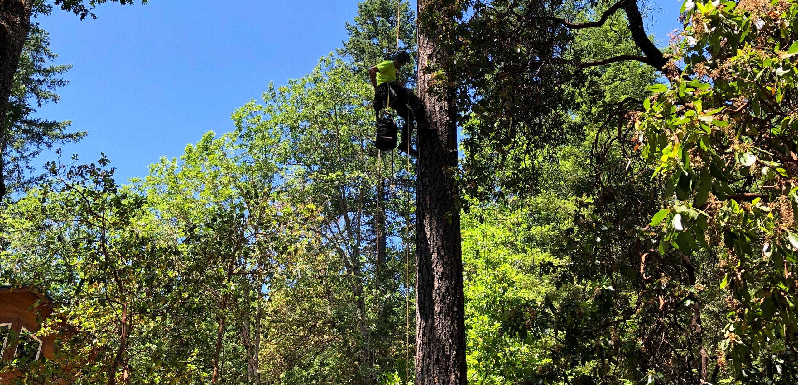 wireless internet tree installation process